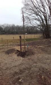 Boomplant Voort 2
